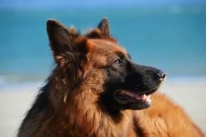 viaggiare da single in camper con il cane